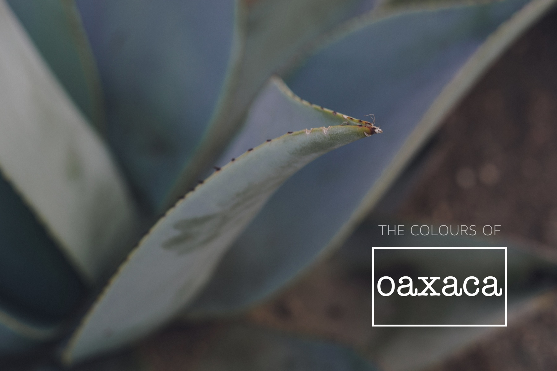 The colors of Oaxaca